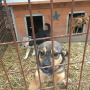 ALPERT res 4Animals