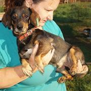 BODO res 4Animals