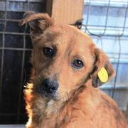 KENAI res 4Animals