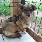 TIFFY (Sally) - reserviert THL (G)