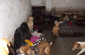 Tierheim von innen Stand: Januar 2013