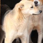 Karla Sch. und Angela G. sorgen für Dingo.