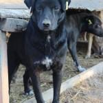 Kirsten L. sorgt für Dogus.