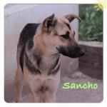 Andrea St. und Christine N. sorgen für Sancho.