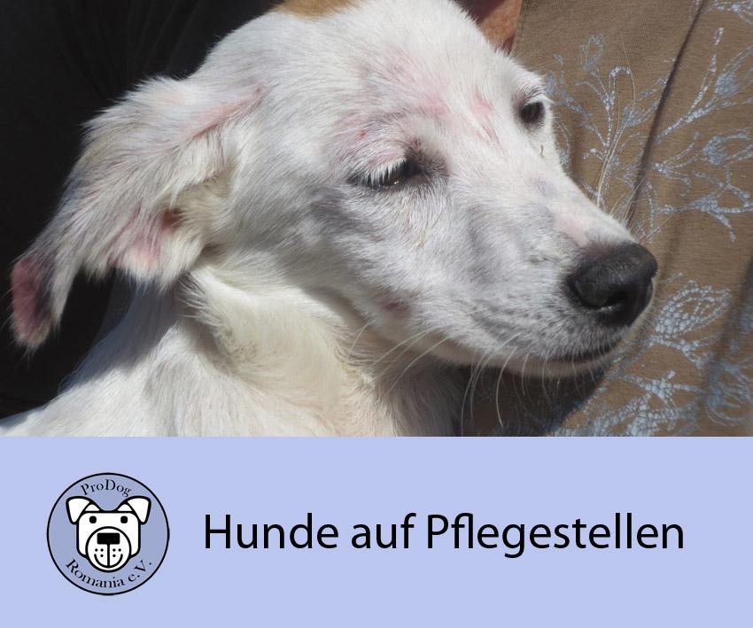 Hunde auf Pflegestellen