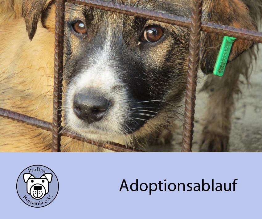 adoptionsablauf