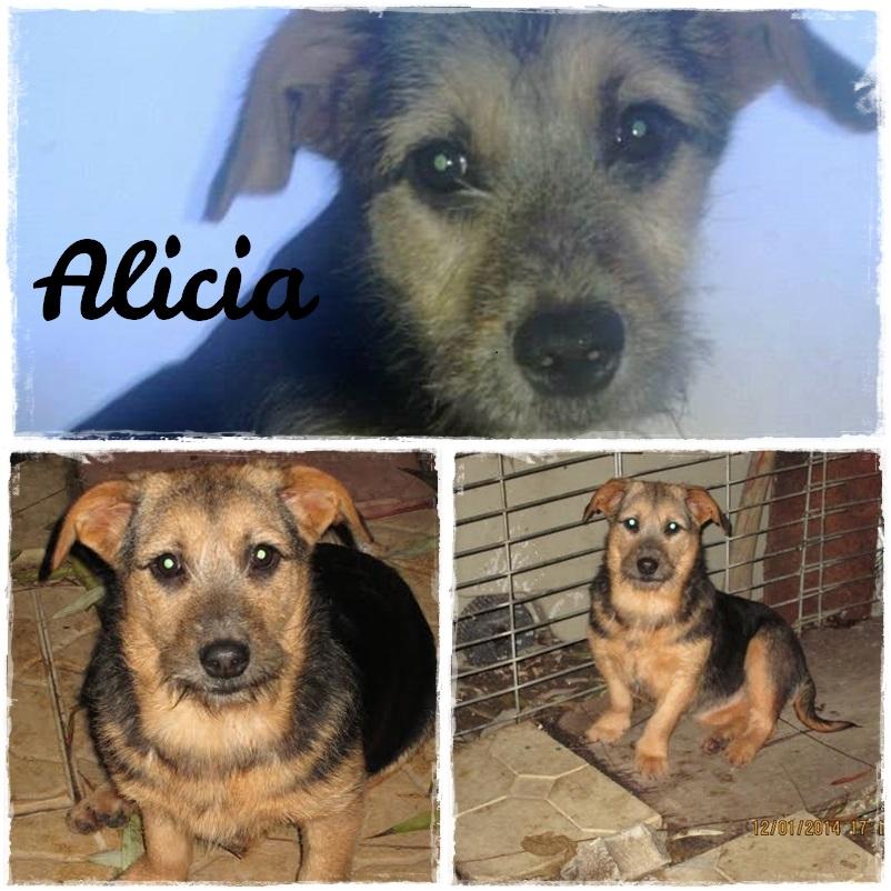 Alicia1.1