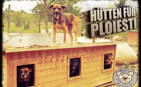Hundehütten für Ploiesti