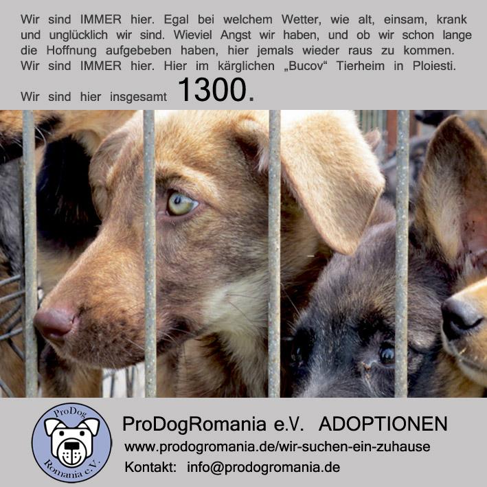 Adoptionen2