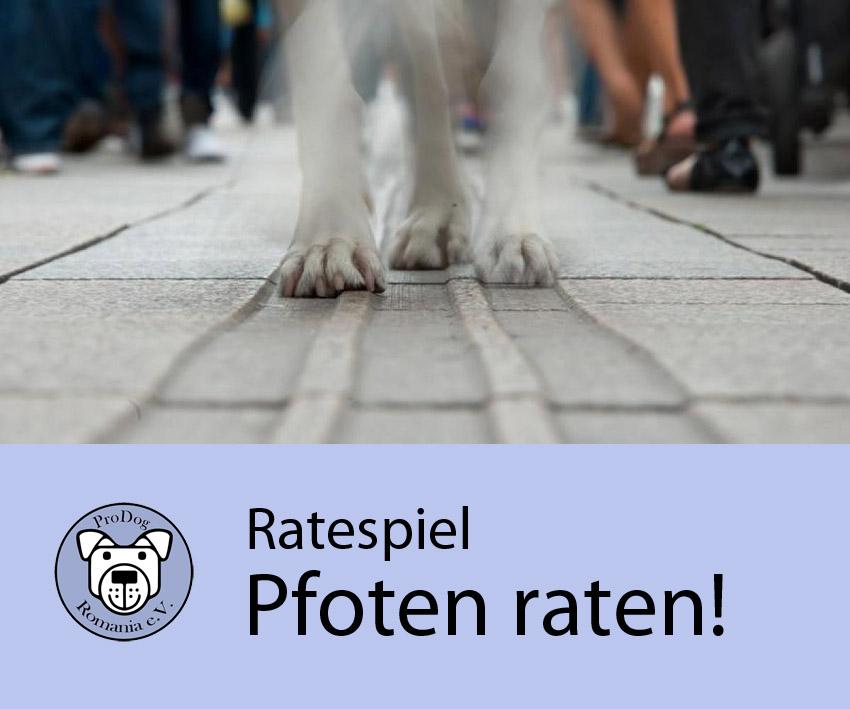 pfoten_raten