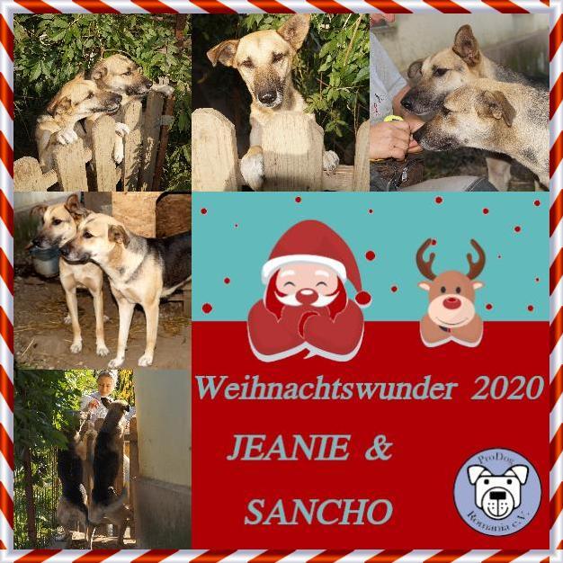 Jeanie & Sancho Rettungsfond