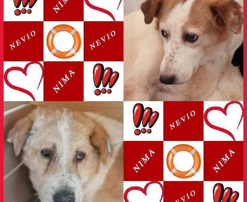 NIMA und NEVIO unsere SOS Gnadenplatz Hochwasserhunde – Gnadenplatzpaten gesucht